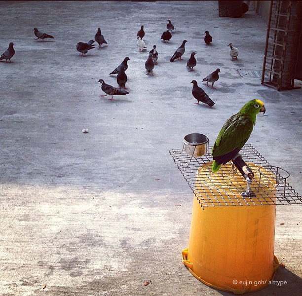 A parrot in captive